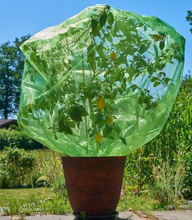 64x56 cm Organzabeutel V/ögel Traubenschutz Frucht-Schutzbeutel mit Zugband zum Schutz vor Wespenfrass Kirschessigfliege und andere Insekten 10 STK Farbe: Gr/ün